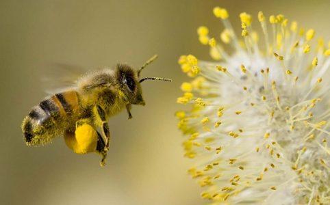 Le jour où j'ai décidé de parrainer une ruche pour sauver les abeilles
